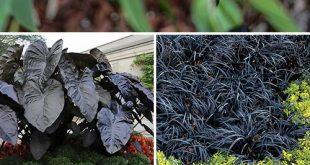 Update Your Garden with Dark & Dramatic Plants
