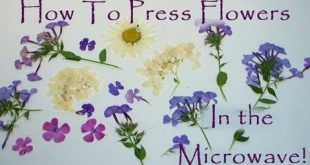 How to Press Flowers and Other Botanicals INSTANTLY