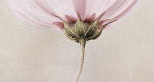 """#Fleur #FLOWER Vote ♡ J'aime sur """"Couleurs de Lecture"""" par Céline RIGAL en su..."""
