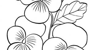 Printable flowers pages to color 036