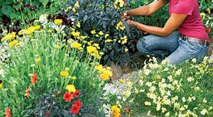 How to design a bright blooming flower garden