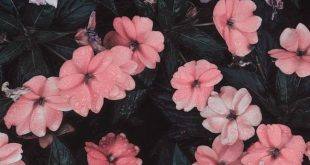 30+ Marvelous Flower Wallpaper for Sytle Your New iPhone #background #flower #ip...