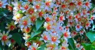 Beautiful flowers - #Beautiful #Flowers