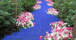 Flower Bed Ideas to Make Your Garden Gorgeous