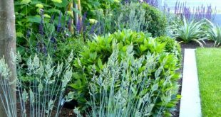 Showcase Gardens – Hampstead Garden DesignHampstead Garden Design