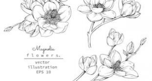 Sketch Floral Botany Collection. Magnolia flower drawings. Black and white with ...