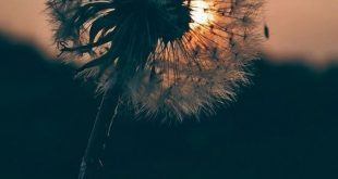 Top schöne Blumen in der Welt A-Z HD IMAGES #garden #flowers #flowerbeauty #beautifulflowers