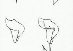 Wie Du eine Calla zeichnest.  #tutorial #Calla #zeichnen  Leer zelf een Calla / ...