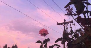 ästhetische Blumenfotografie - aesthetic - #Aesthetic #ästhetische #Blumenfot...